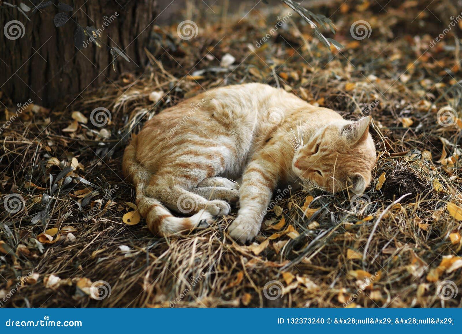 Nuova foto smarrita di Cat Photographer, gatto giallo sveglio