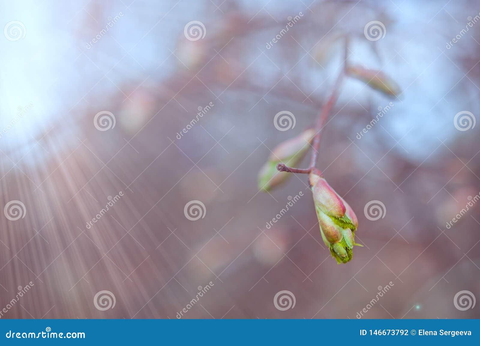 Nuove foglie verdi sul ramo della molla