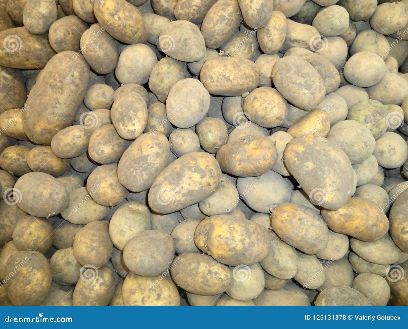 Nuove patate del raccolto accatastate su