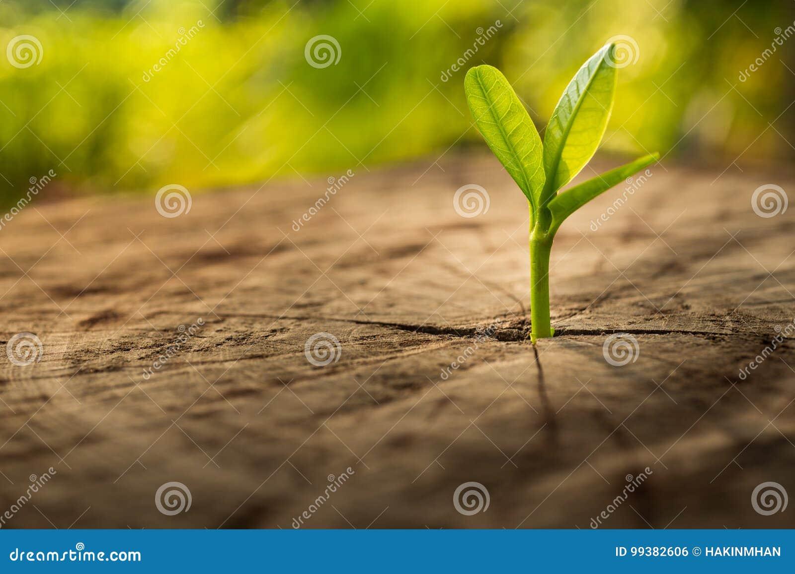 Nuovo concetto di vita con l albero crescente del germoglio della piantina