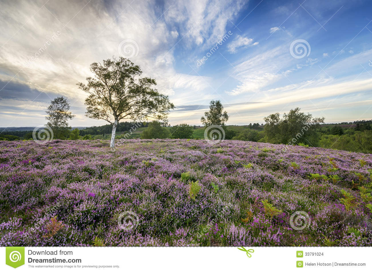 Nuovo Forest Heather