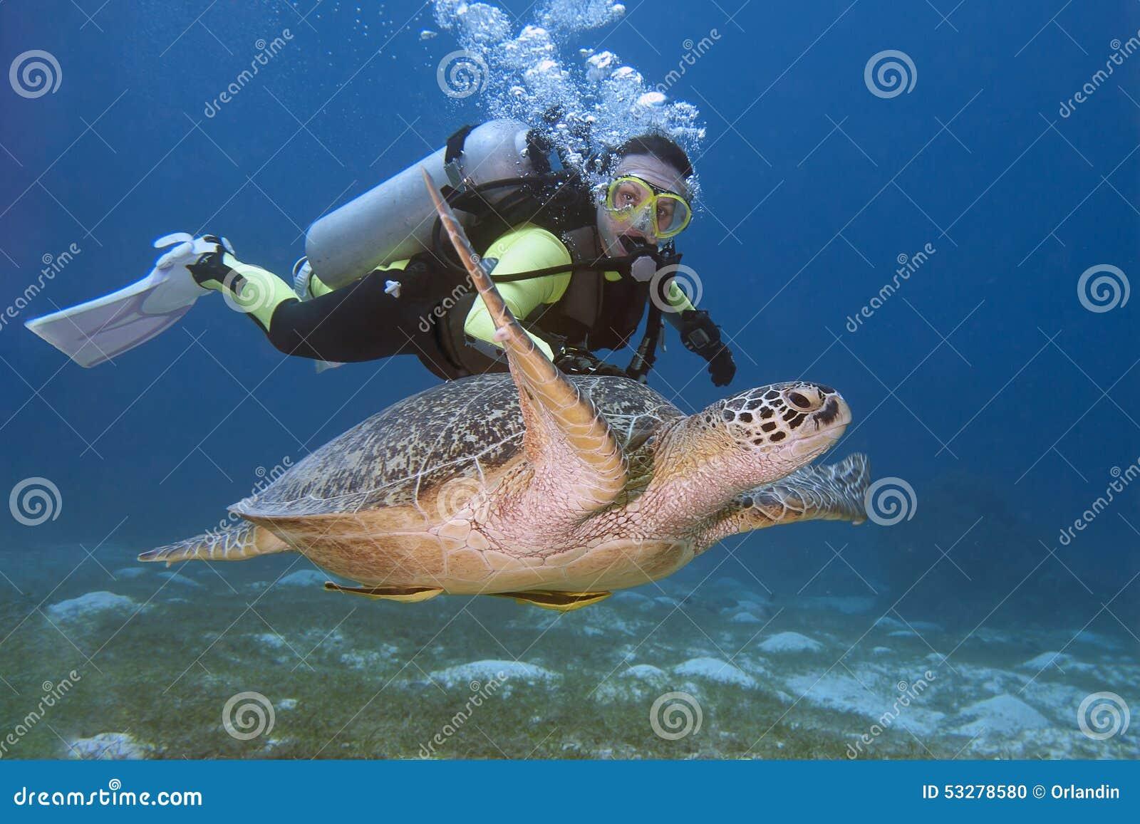 Nurek i żółw