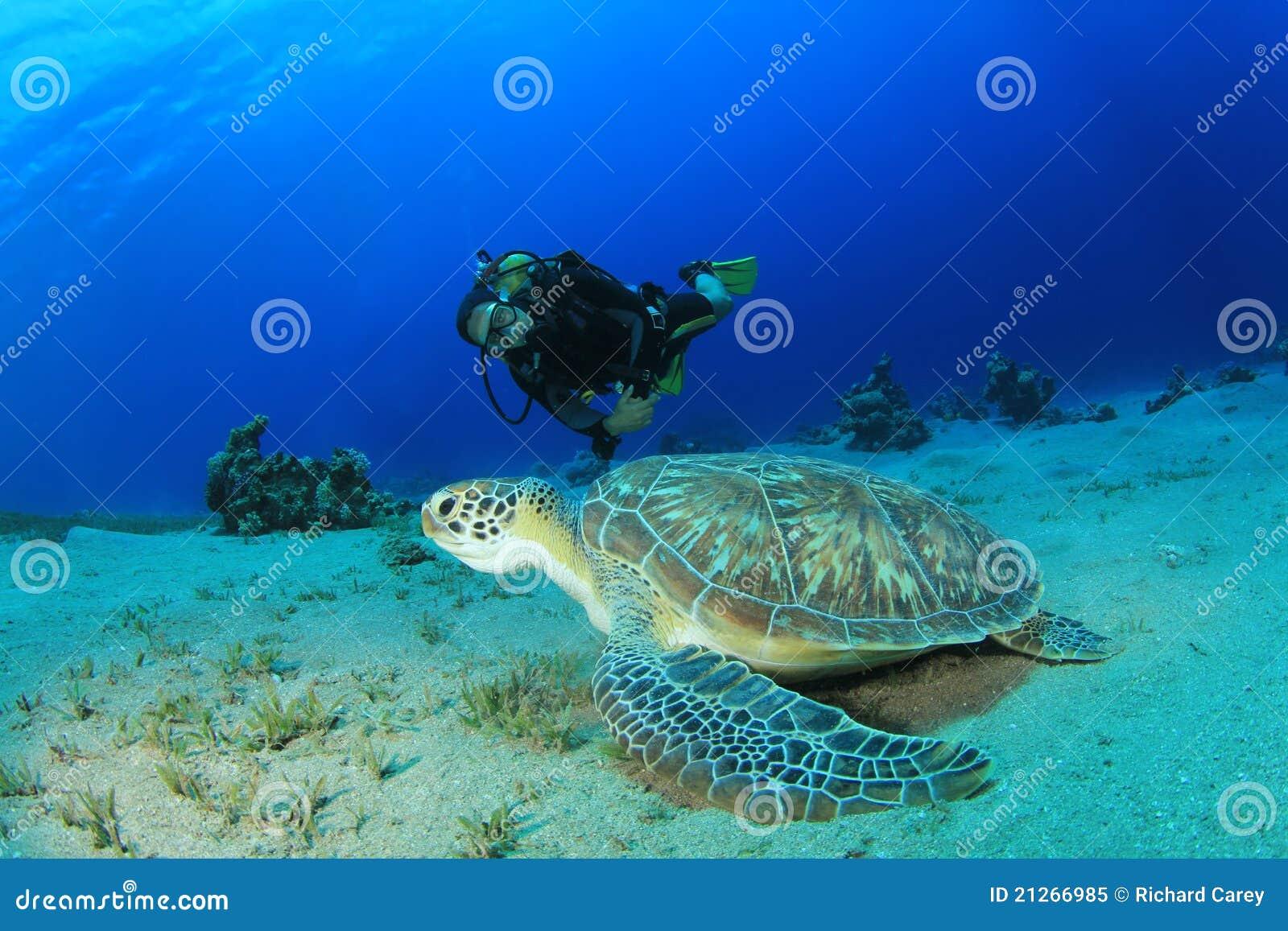 Nurka zielony akwalungu żółw