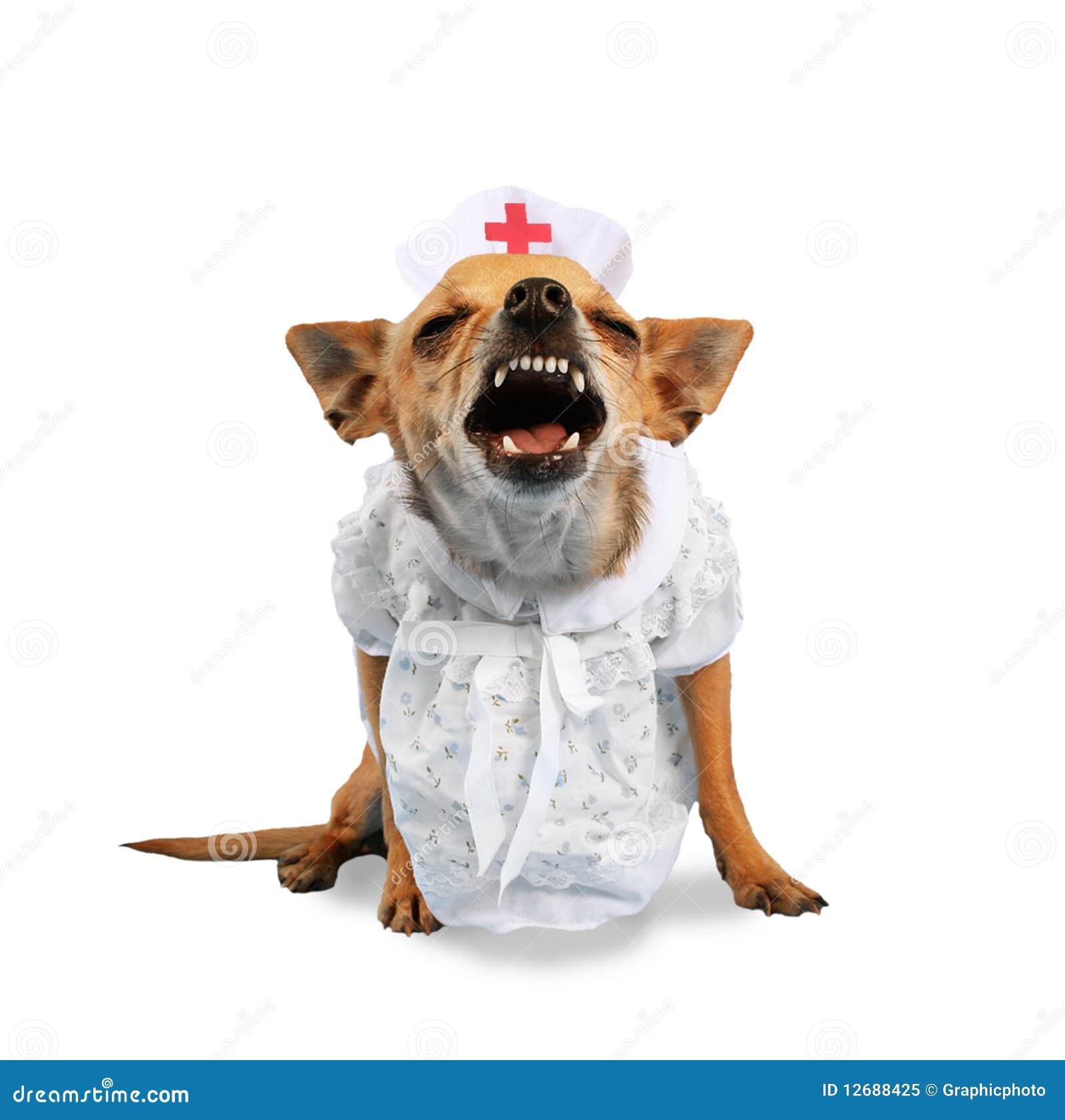Free Wellness Exam For Dogs