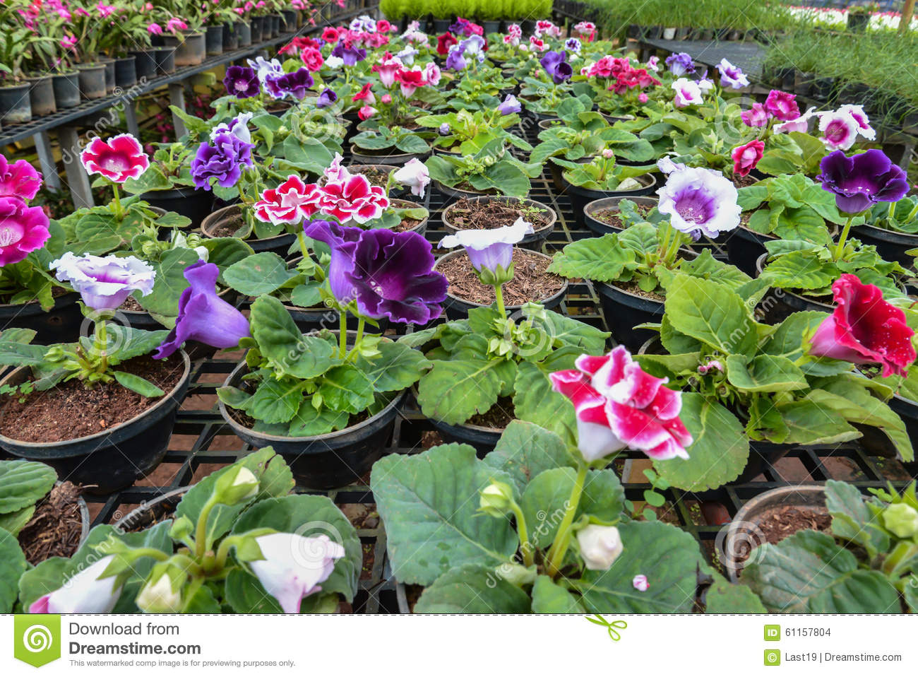 Nursery Flowers Stock Photo Image 61157804