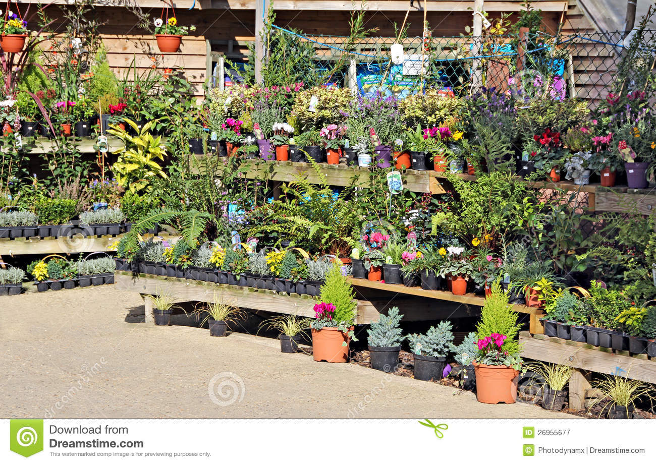 Nursery garden plants royalty free stock photography for Flowers and gardens pictures
