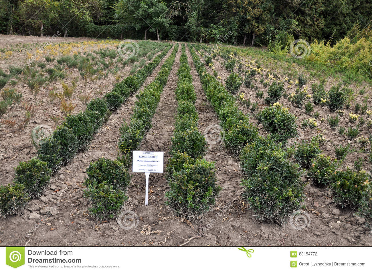 Nursery For Growing Forest Crops Stock Photo - Image of garden