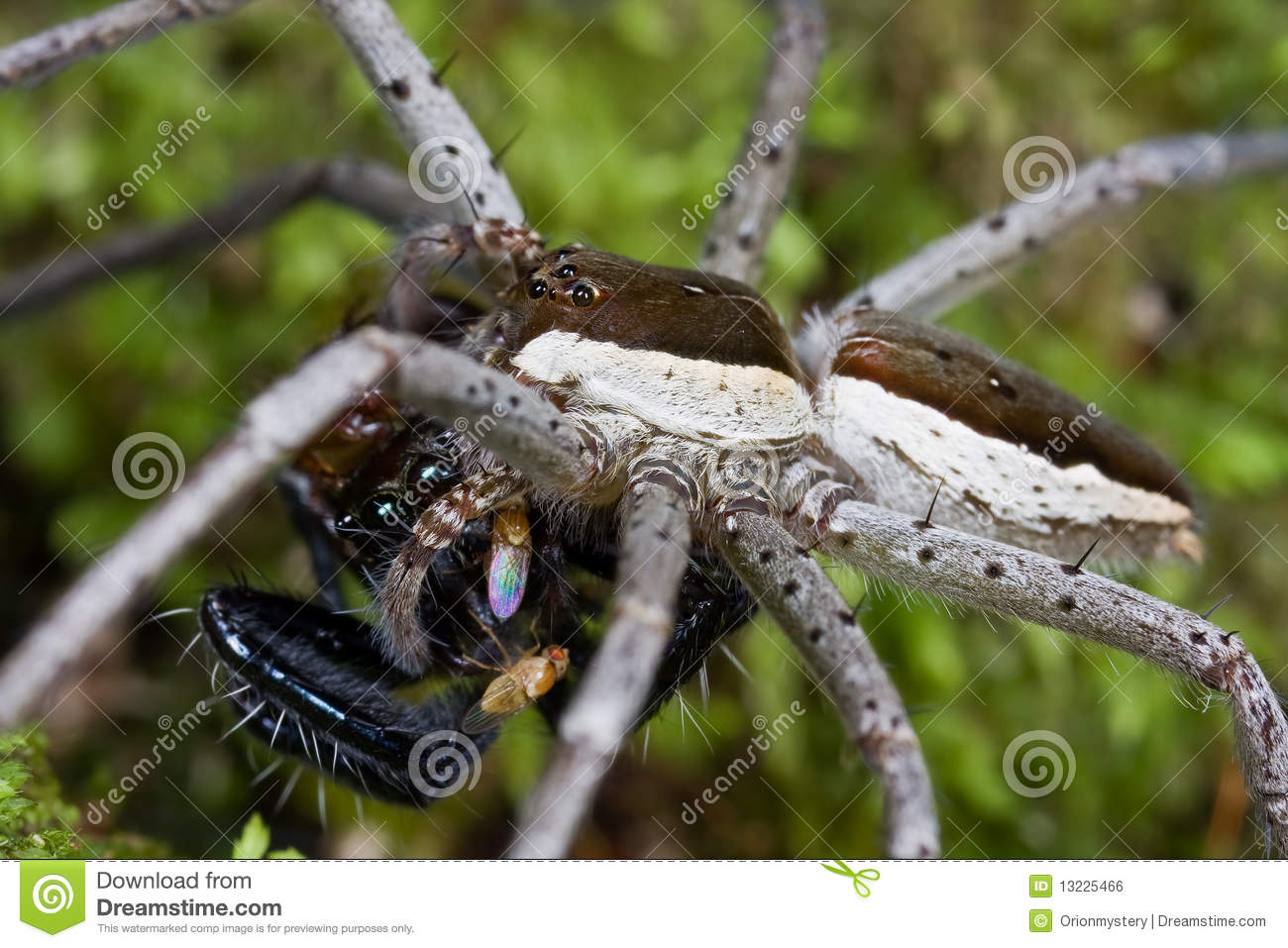 Spider in web with prey - photo#21