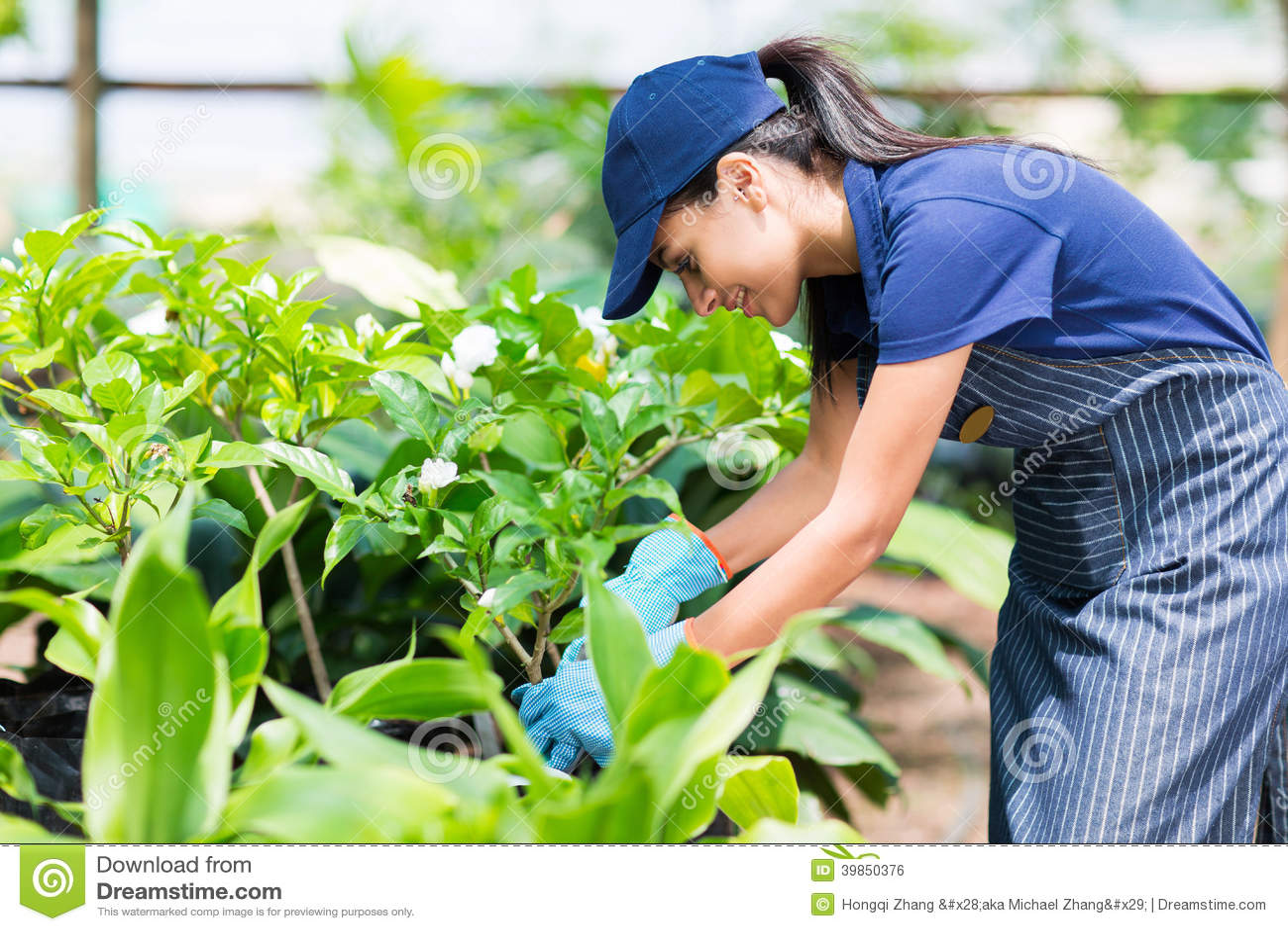 Nursery Worker Greenhouse Stock Photo - Image: 39850376