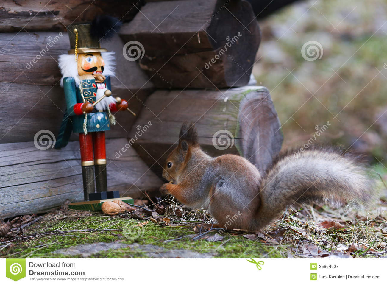 Nutcracker and squirrel royalty free stock photography image 35664007 - Nutcracker squirrel ...