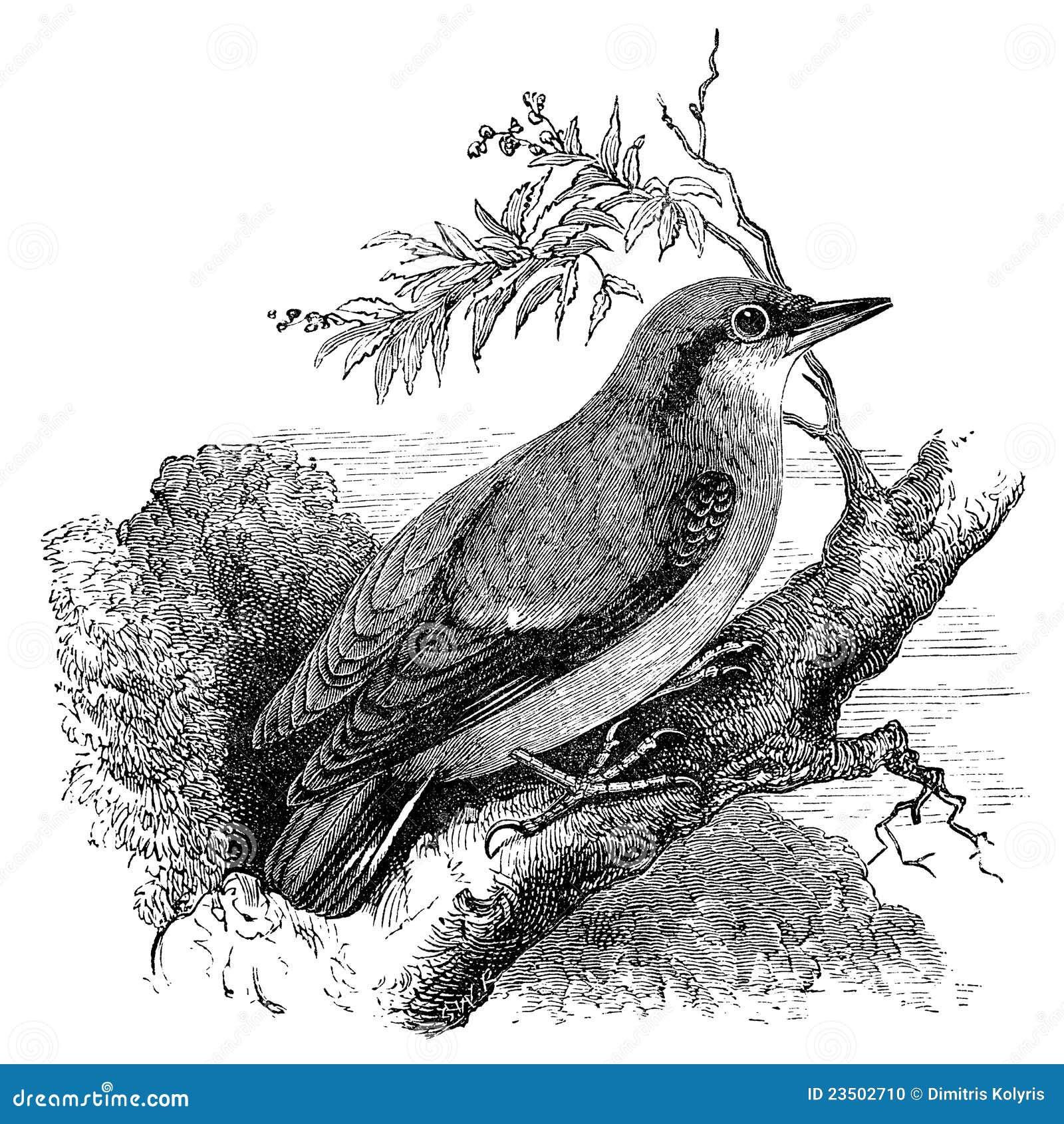 Flying bird illustration vintage - photo#24