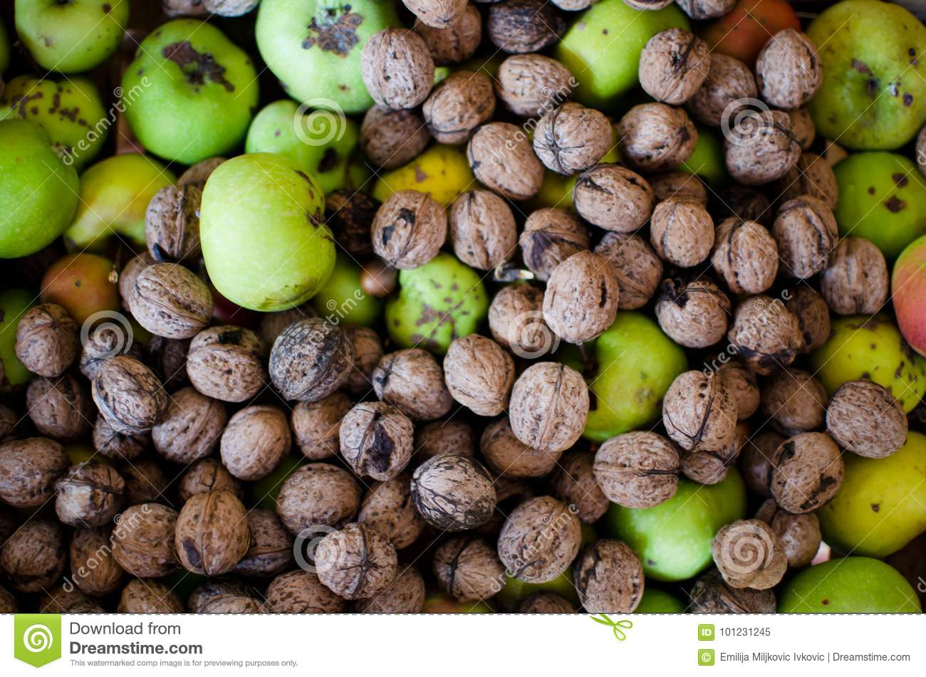 19a3fa3e4a8d Nuts and apples on pile stock image. Image of fruit - 101231245