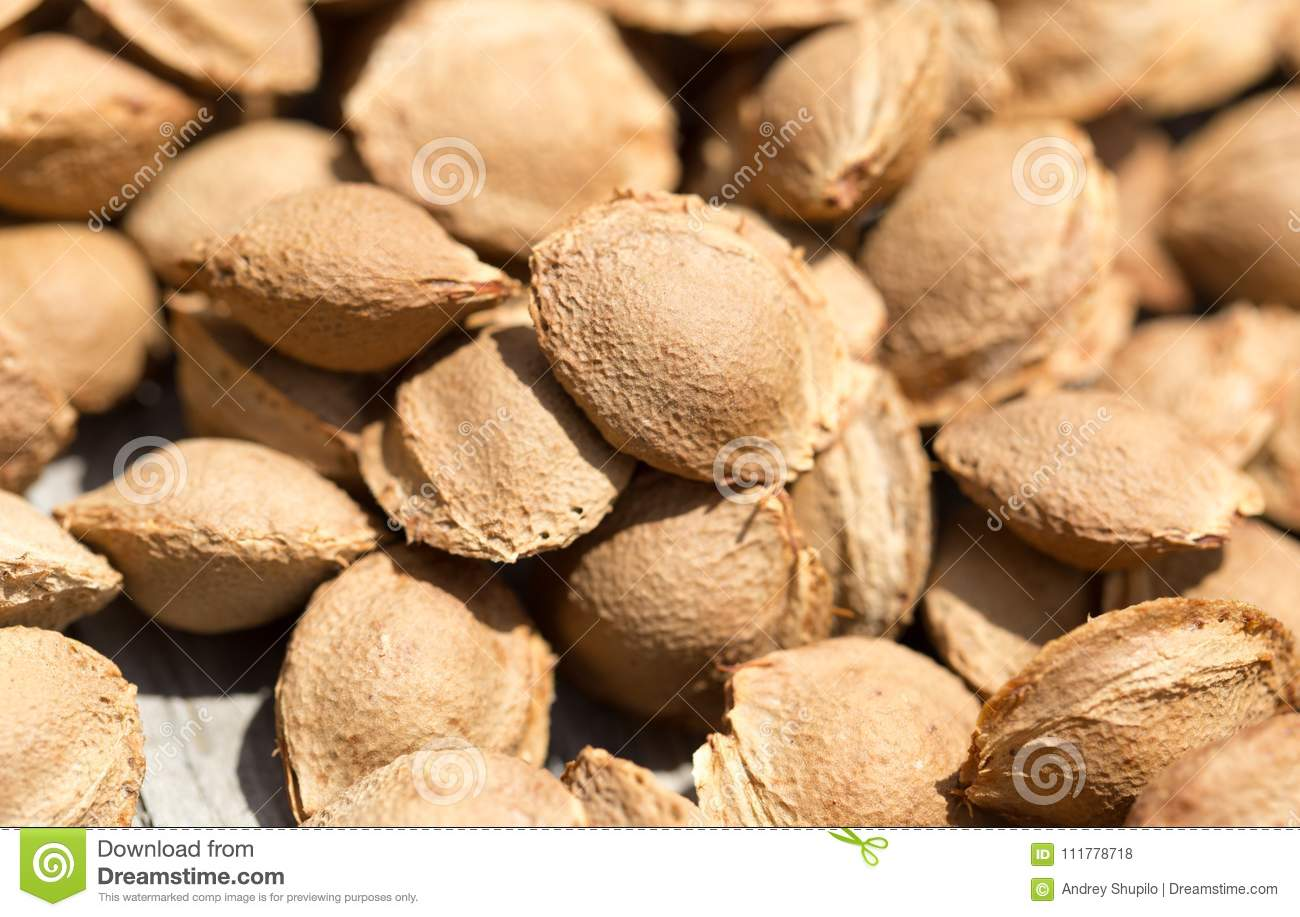 Nuts from apricots as background