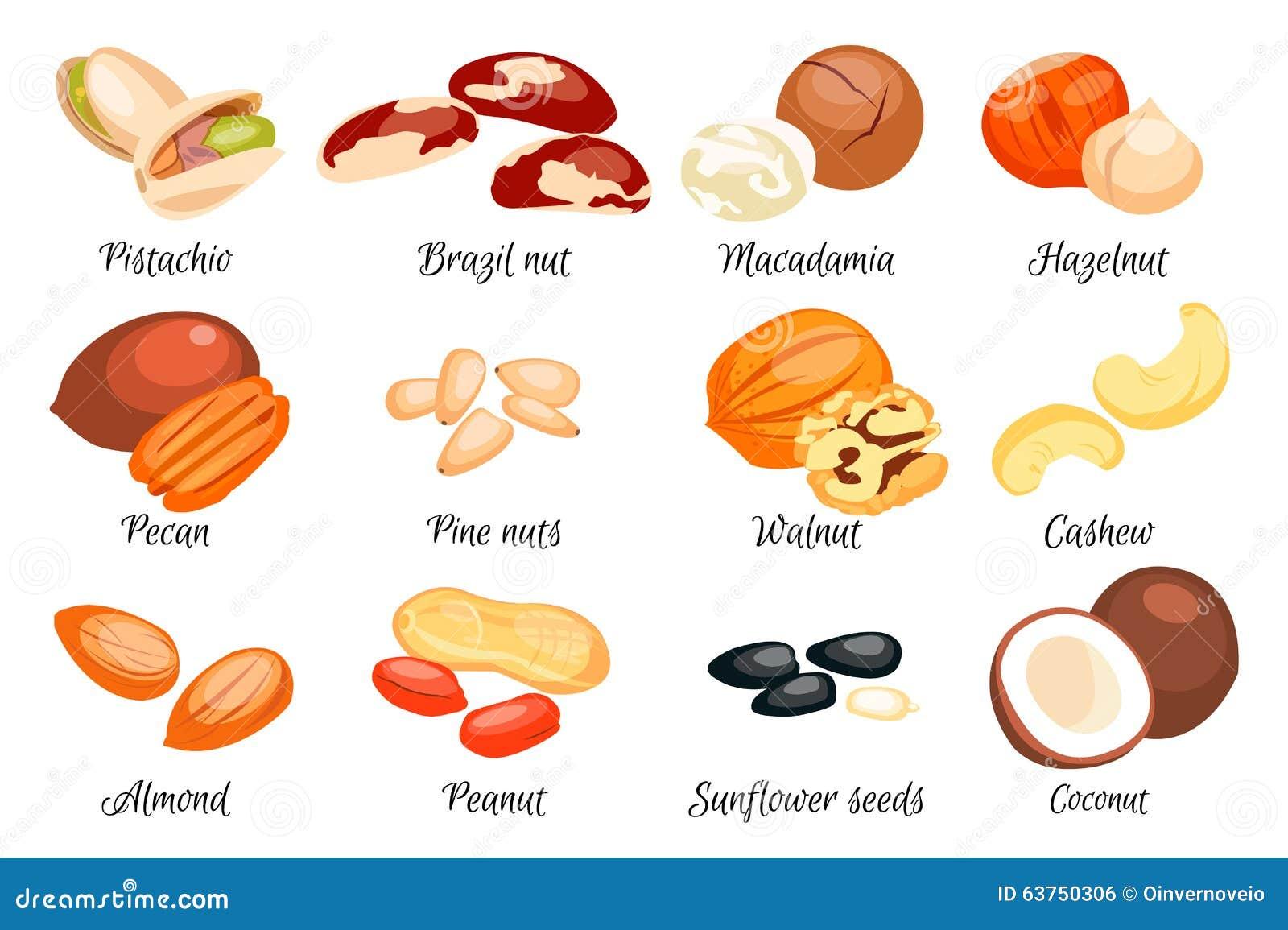 Nuts Set. Vector Illustration Stock Vector - Image: 63750306