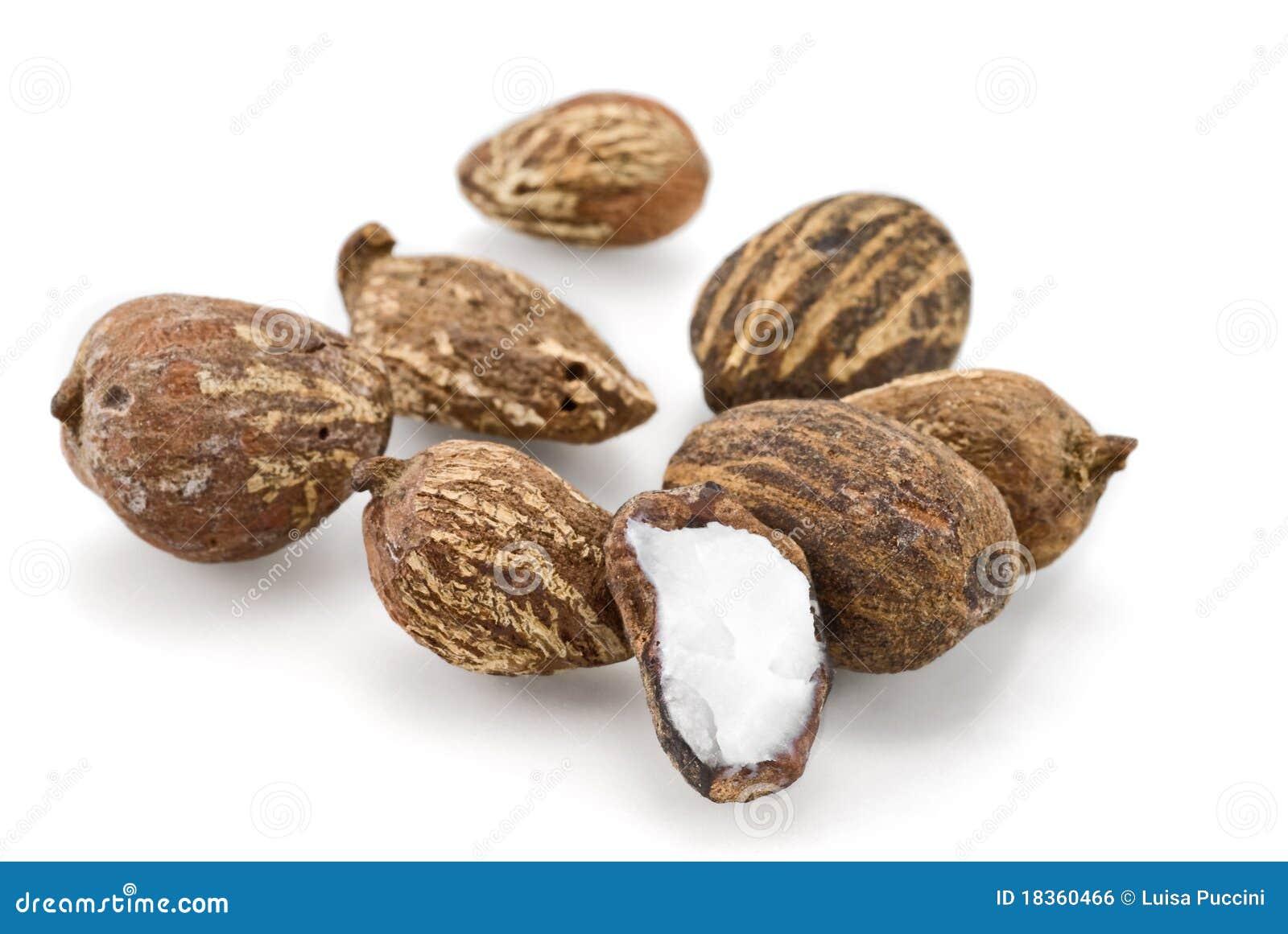 Nuts shea