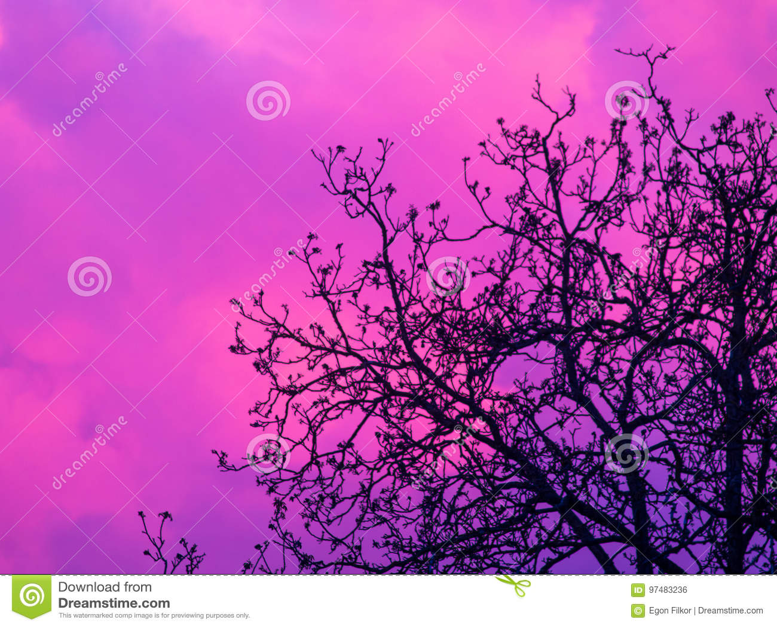 Nuvola dietro l albero