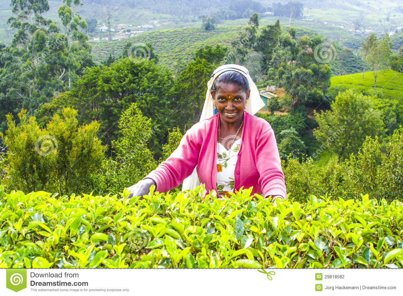 tea industry Tea is one of the most refreshing and popular beverages of the world india is one the the largest tea producer in the world indian tea is the finest quality in the world.