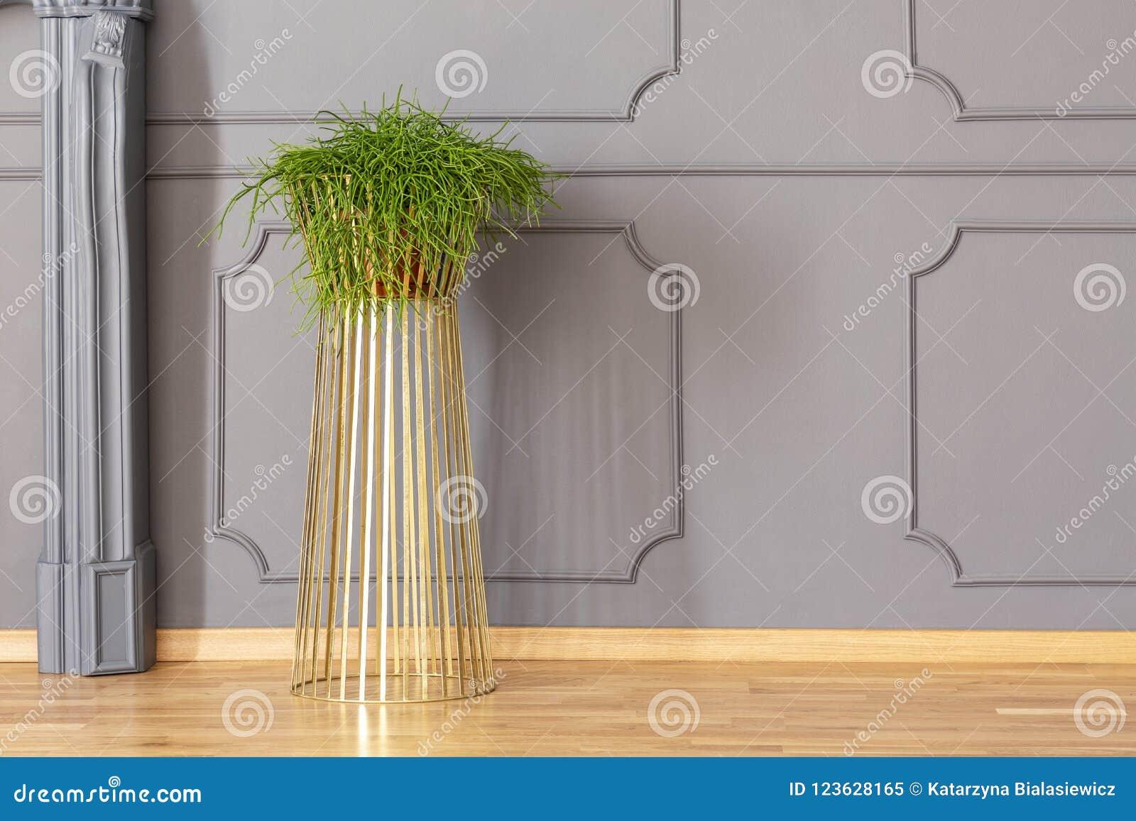 Ny gräsplan lade in växten som förlades på guld- ställning för metall i grå färgrum