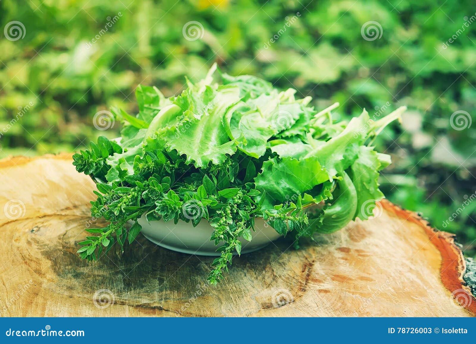 Ny grön sallad