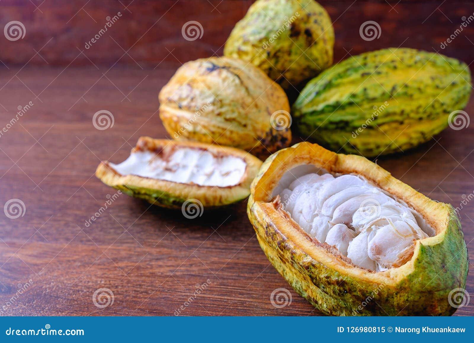 Ny kakao och kakaofröskida med rå kakao