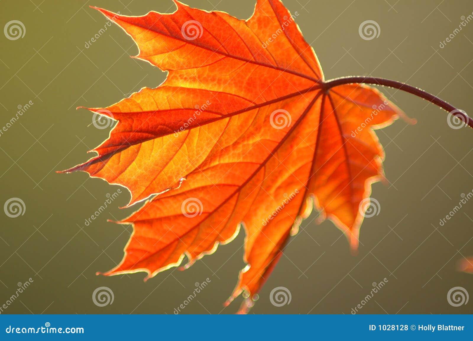 Ny leaf
