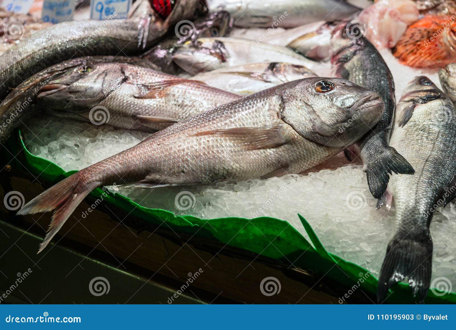 Ny skaldjur på isdorada