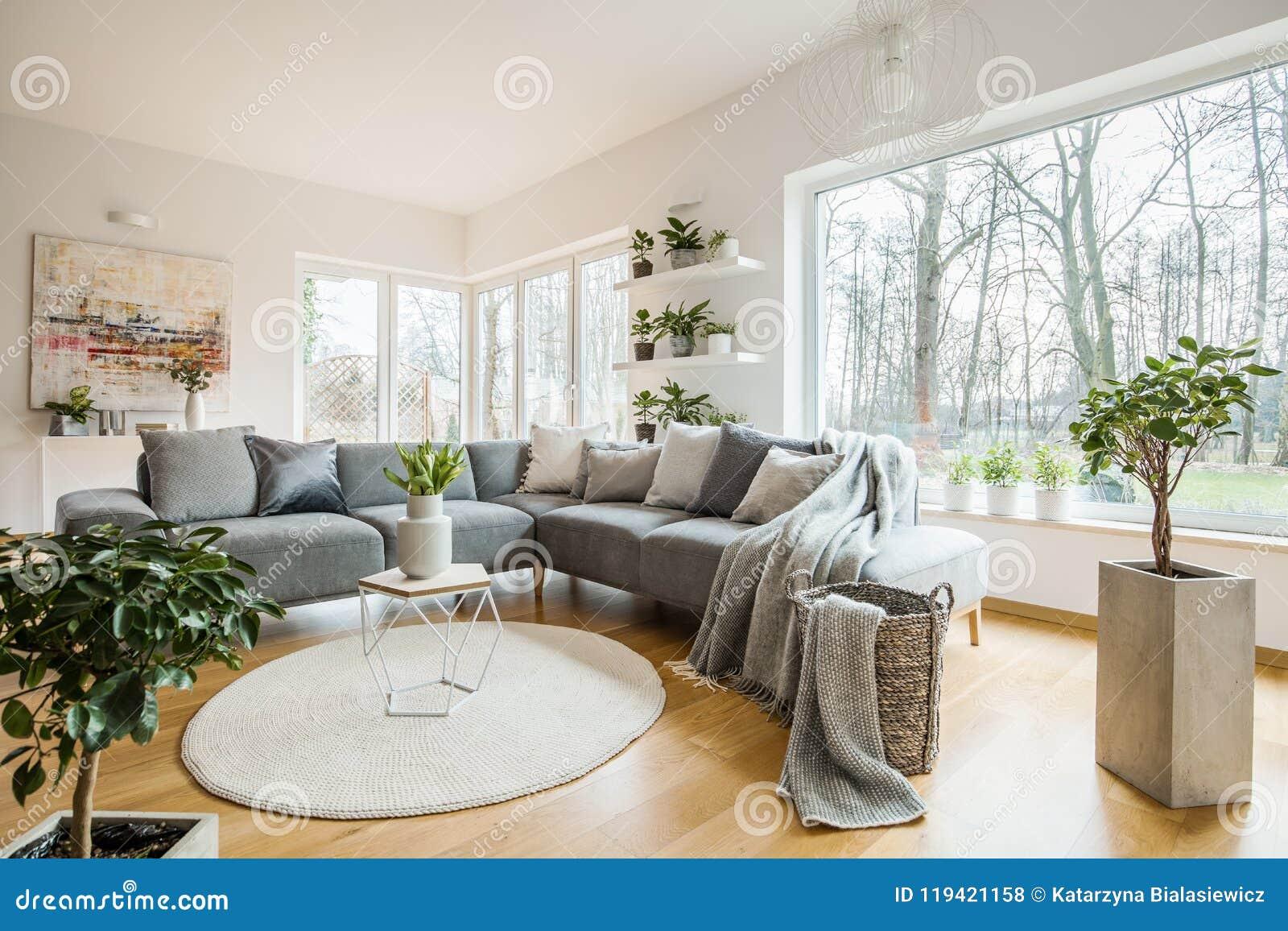 Nya gröna växter i den vita vardagsruminre med hörnsoffan med kuddar och filten, den glass dörren och den lilla tabellen med tulp