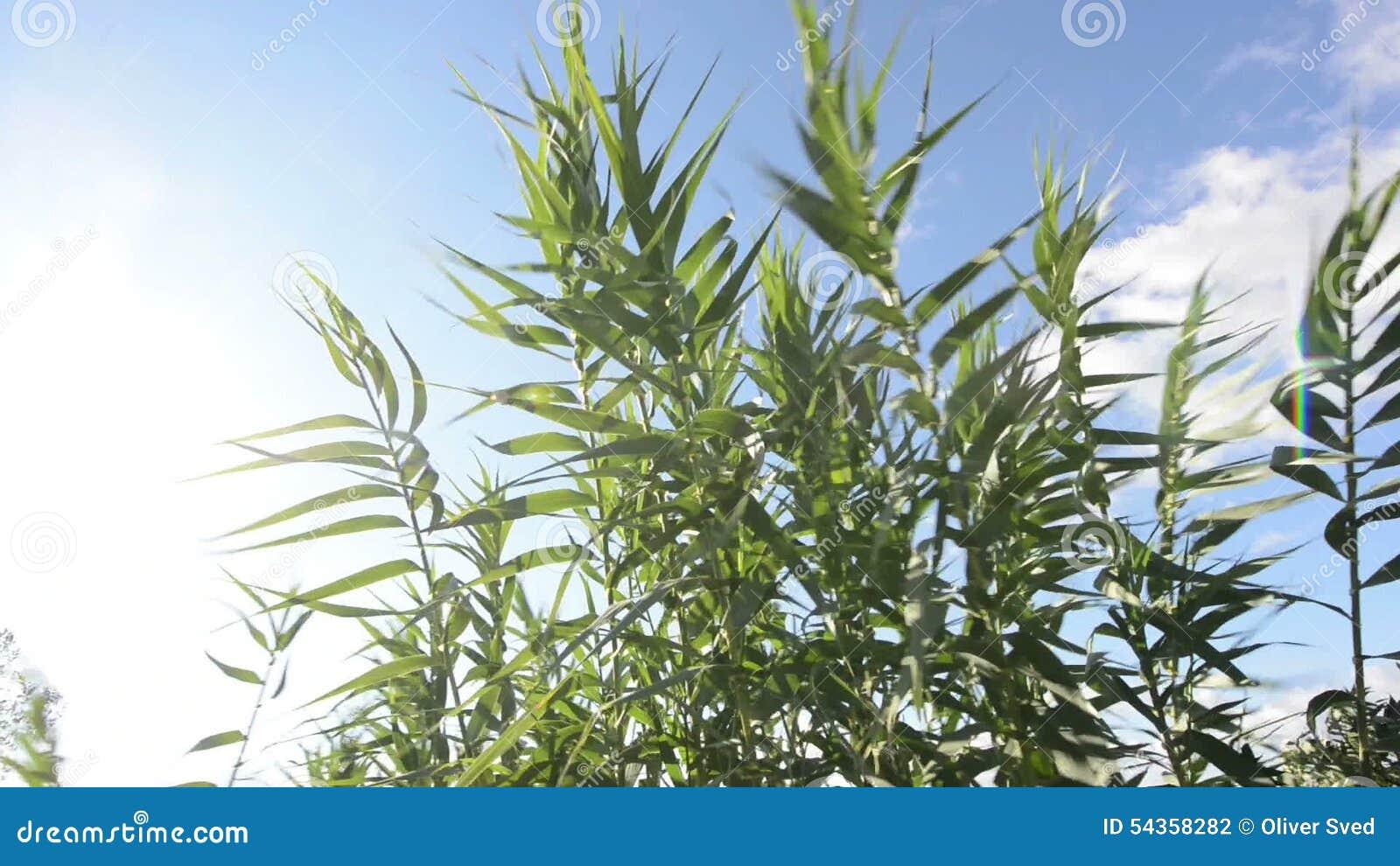 gröna växter utomhus
