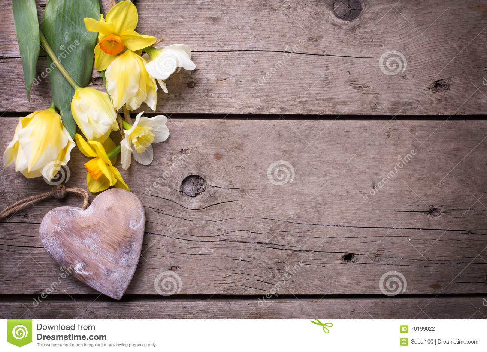 Nya gula tulpan och påskliljablommor och dekorativ hjärta