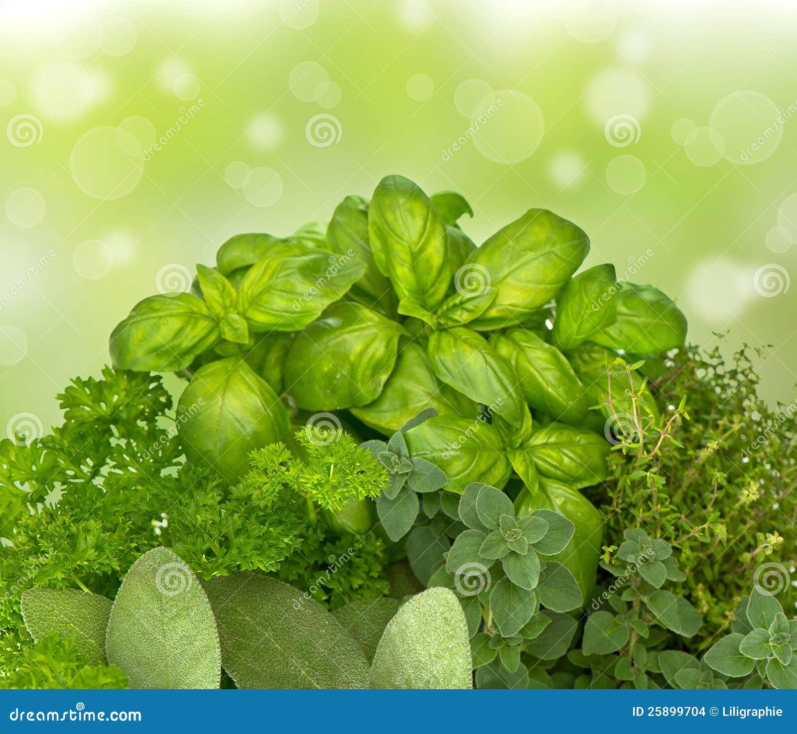 Nya kökörtar på blured grön bakgrund