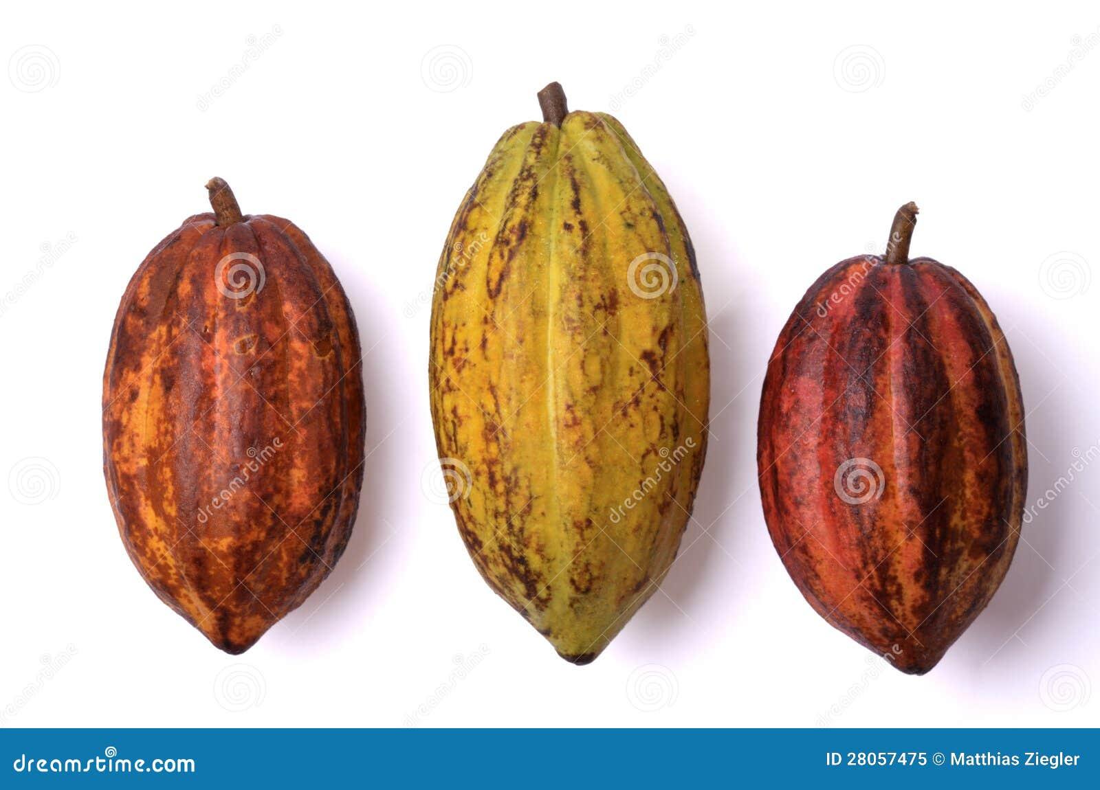 Nya kakaofrukter