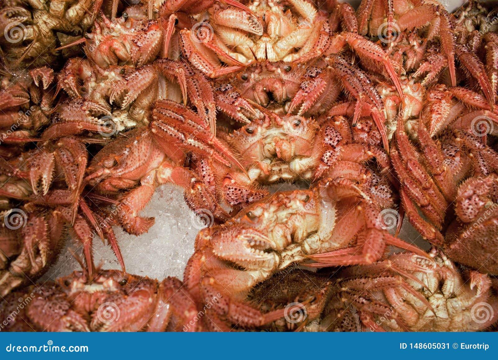 Nya krabbor på den Tsukiji fiskmarknaden i centrala Tokyo, Japan
