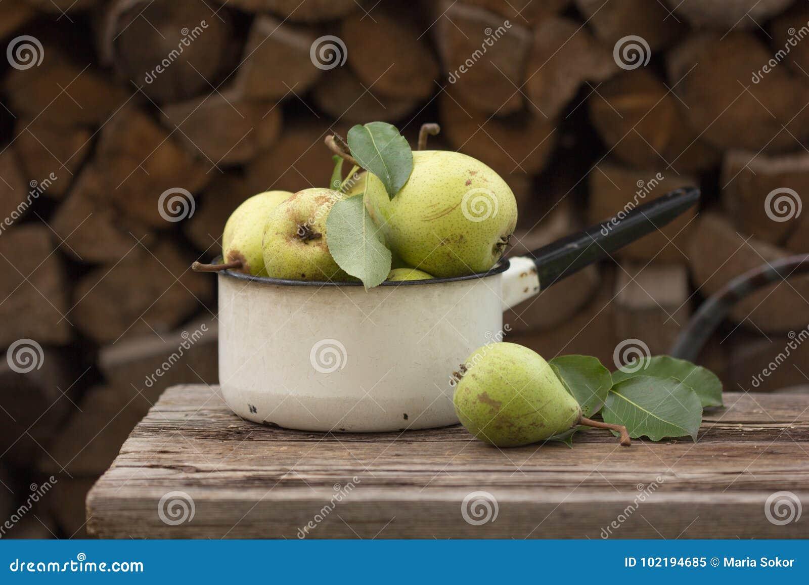 Nya mogna äpplen i maträtten Plockningäpplen i sommarfruktträdgård Organiska frukt och grönsaker