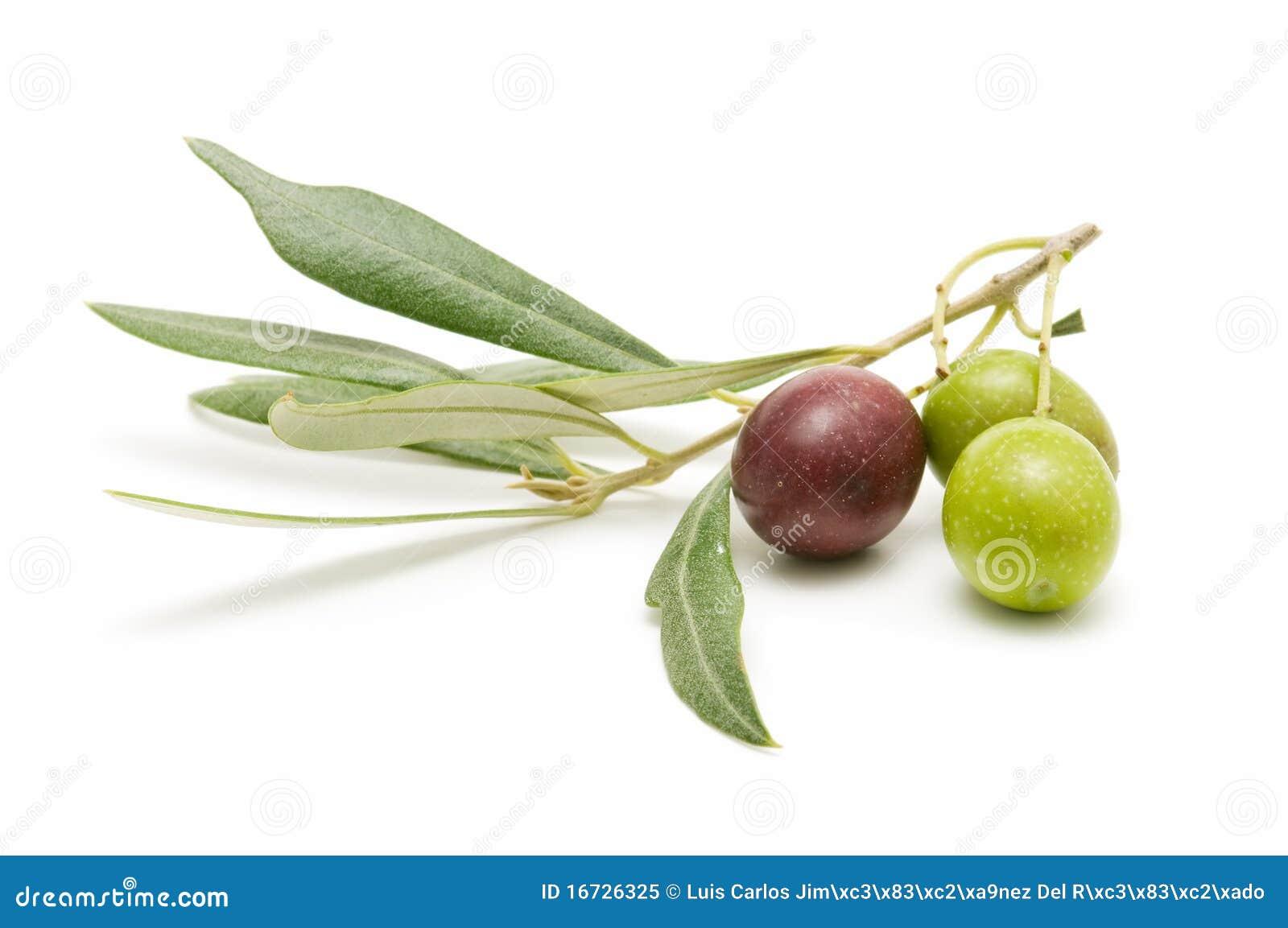 Nya olivgrön