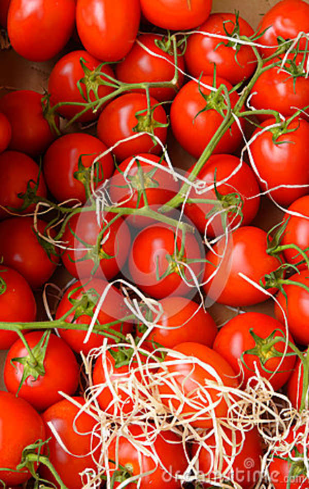 Nya röda tomater