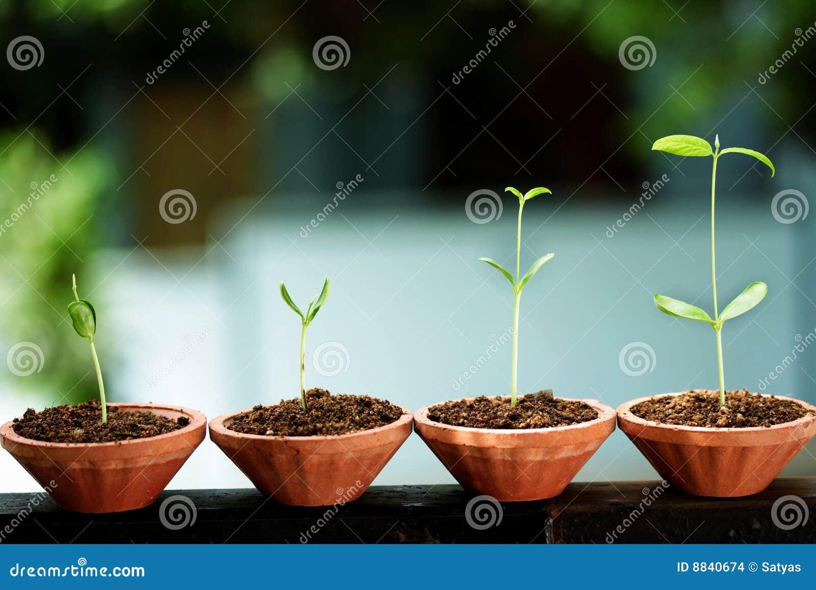 Nya saplings för livstid