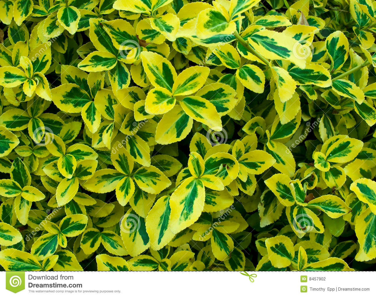 Nyanserade leaves