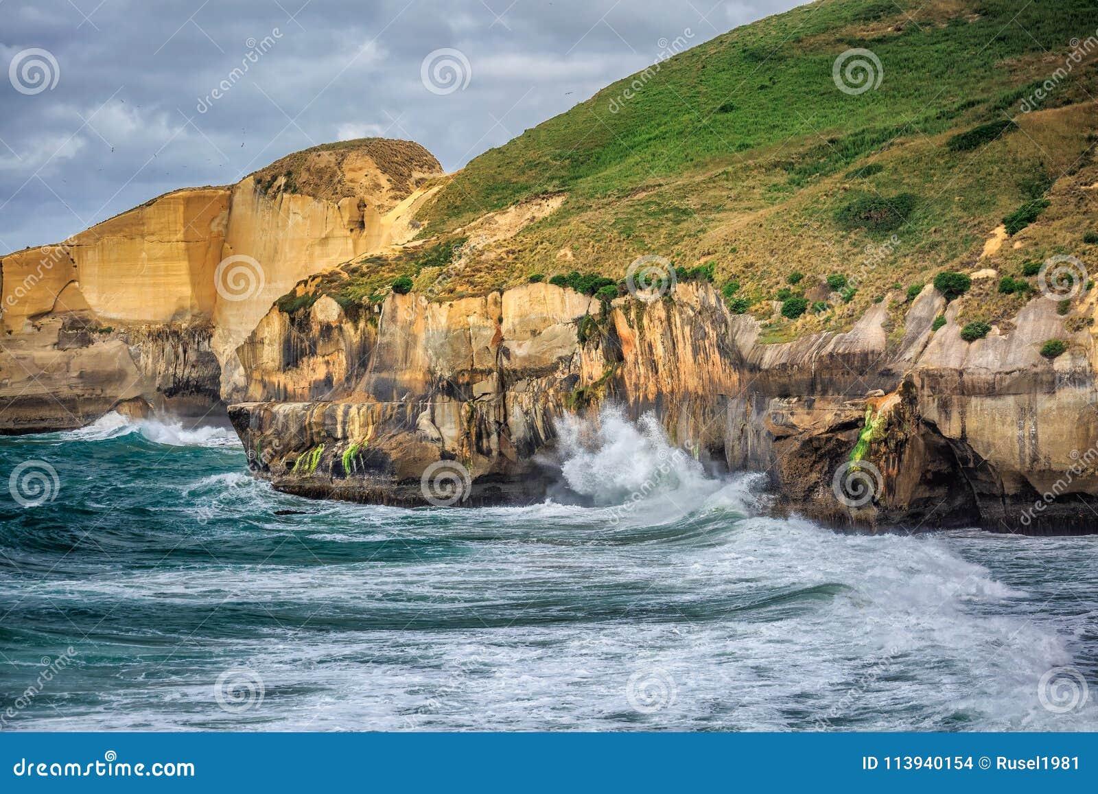 Nyazeeländsk kust