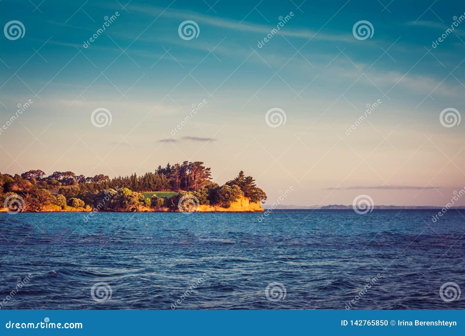 Nyazeeländskt iconic landskap - llushgräsplan av träden och klippan över det blåa havet