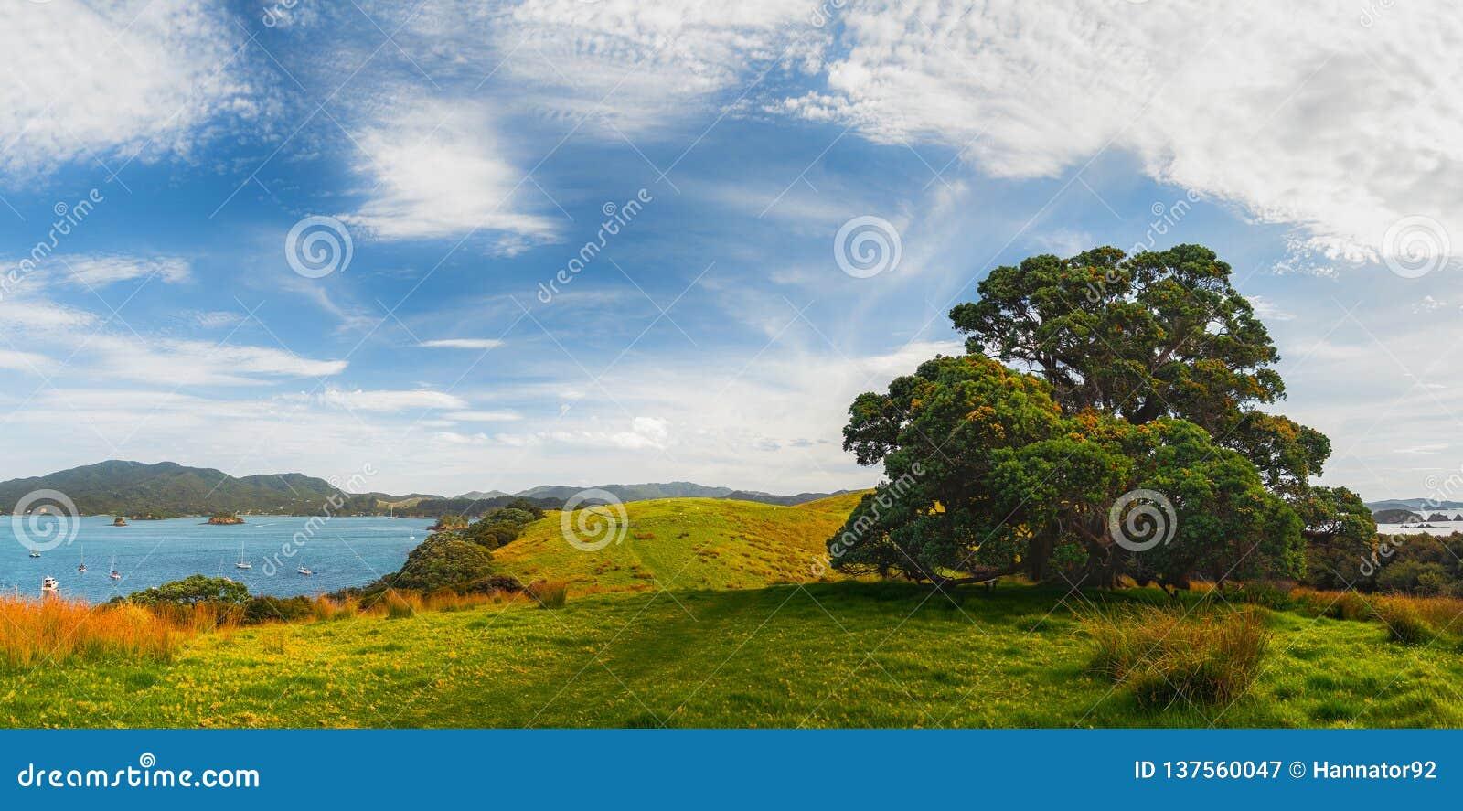 Nyazeeländskt landskap med det Pohutukawa trädet på fjärden av öar
