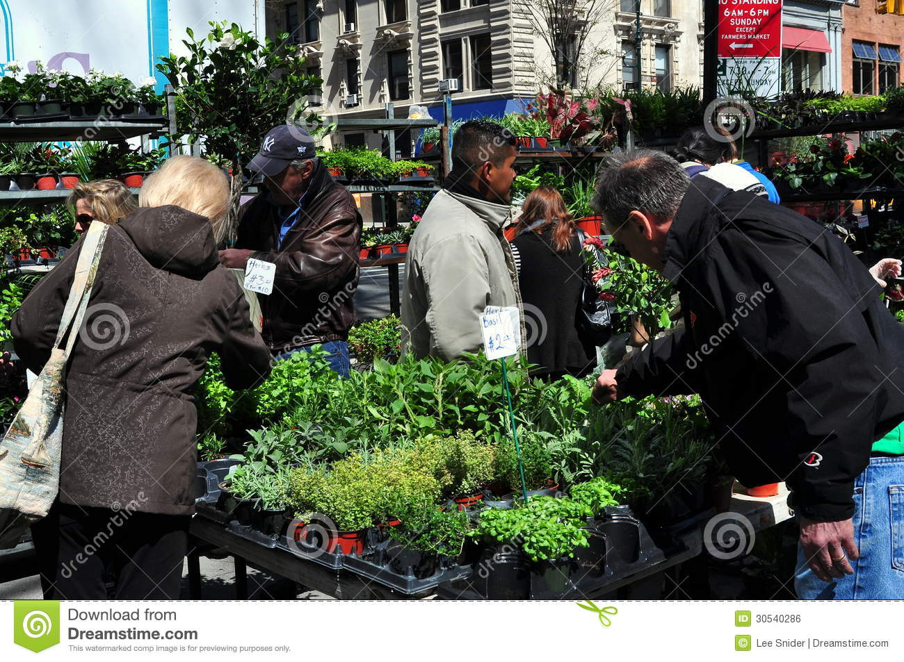 NYC: People Buying Plants At Farmer's Market Editorial Photo