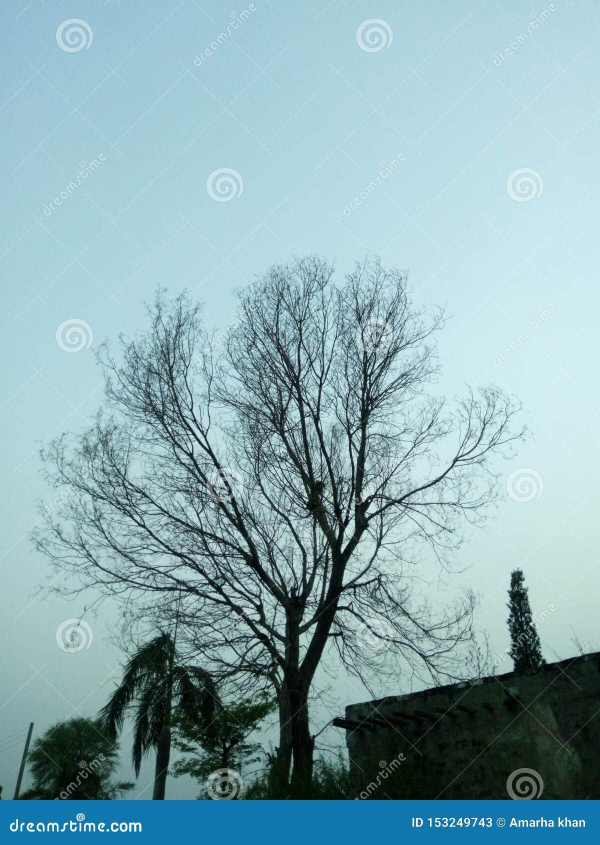 Nyctophilia Stock Image Image Of Nyctophilia Tree 153249743