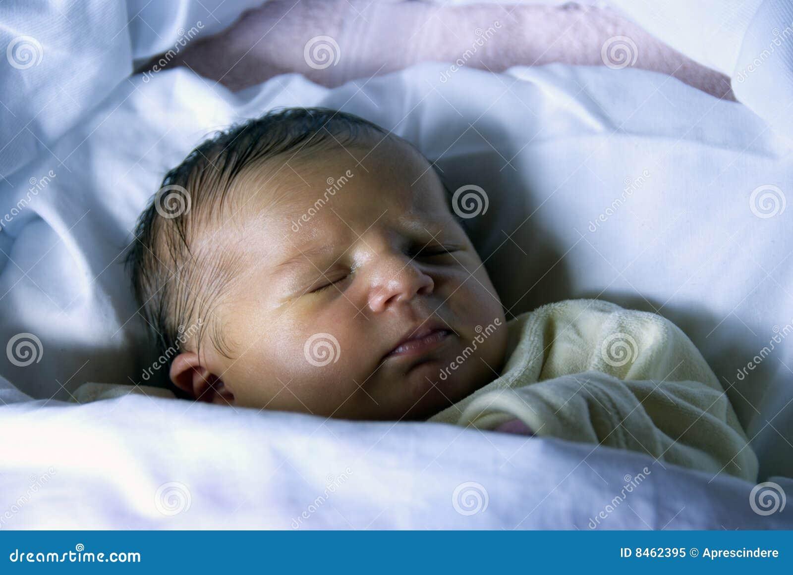 Nyfött sova sött
