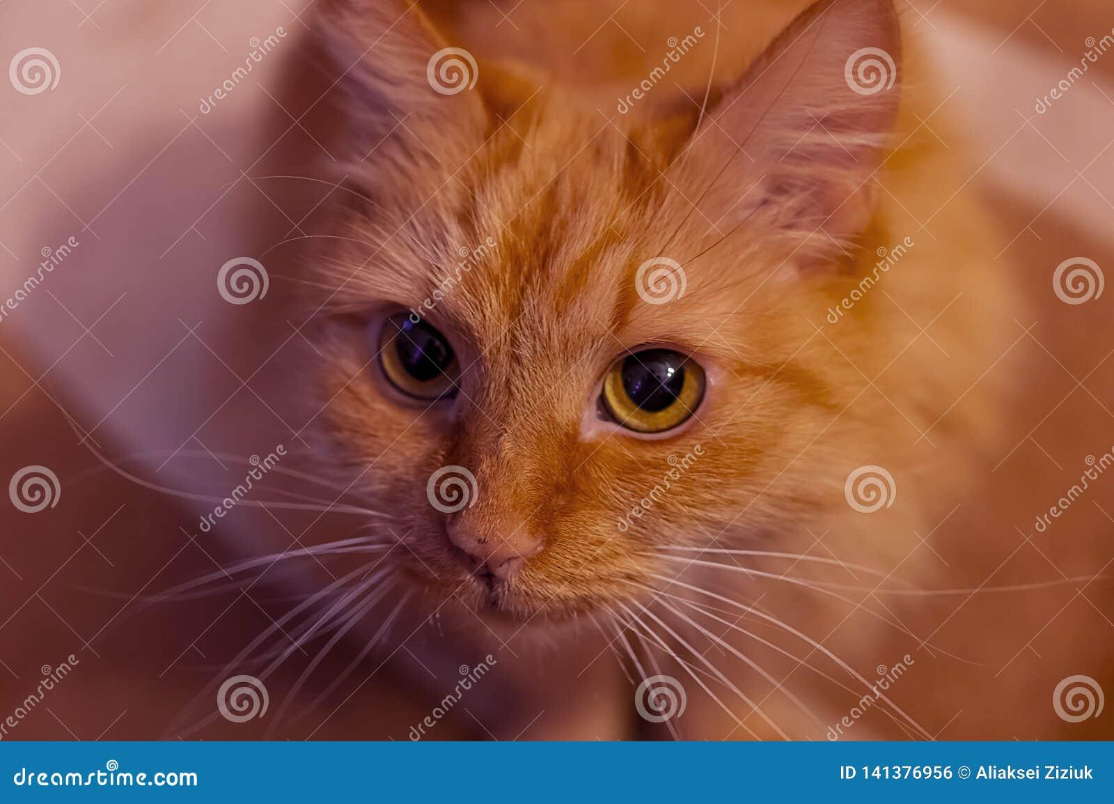 Nyfiken katt, närbild