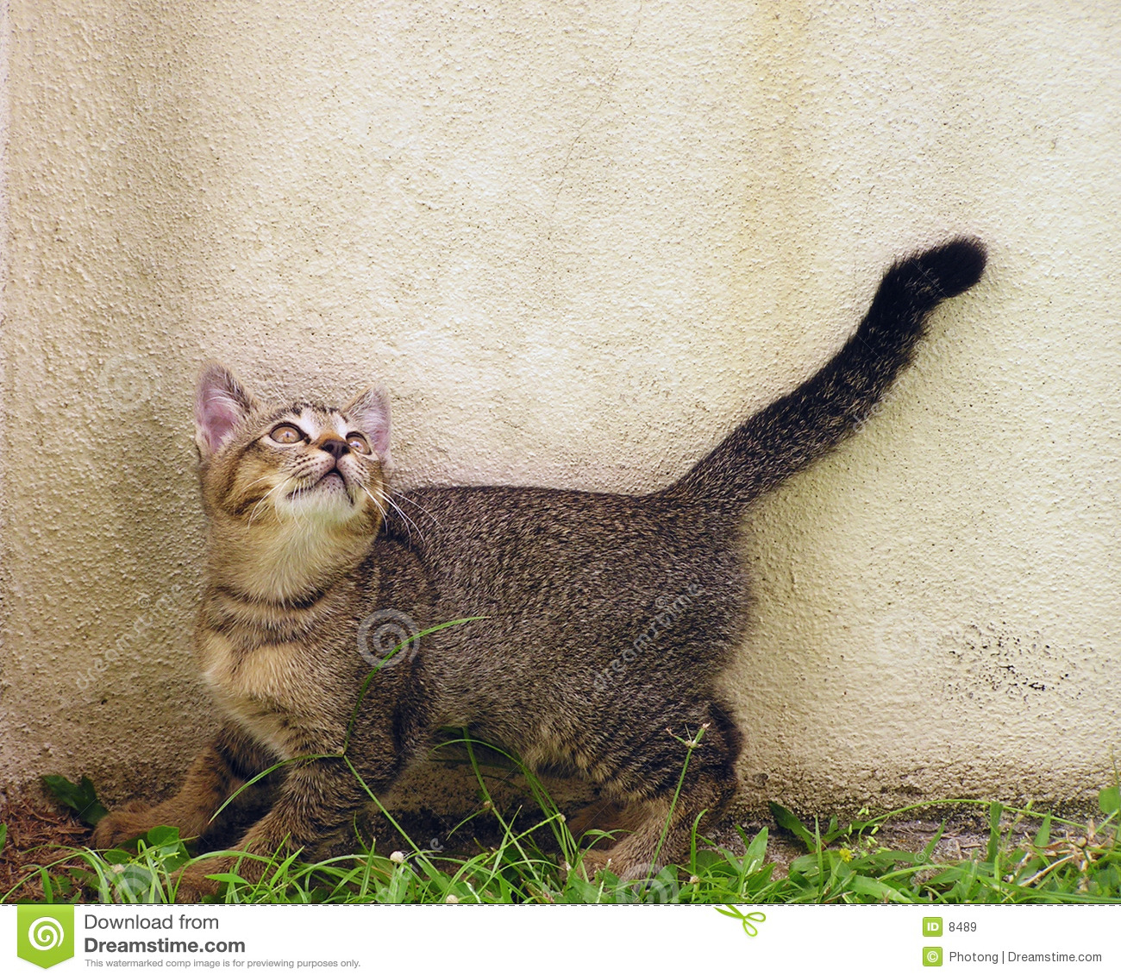 Nyfiken kattunge