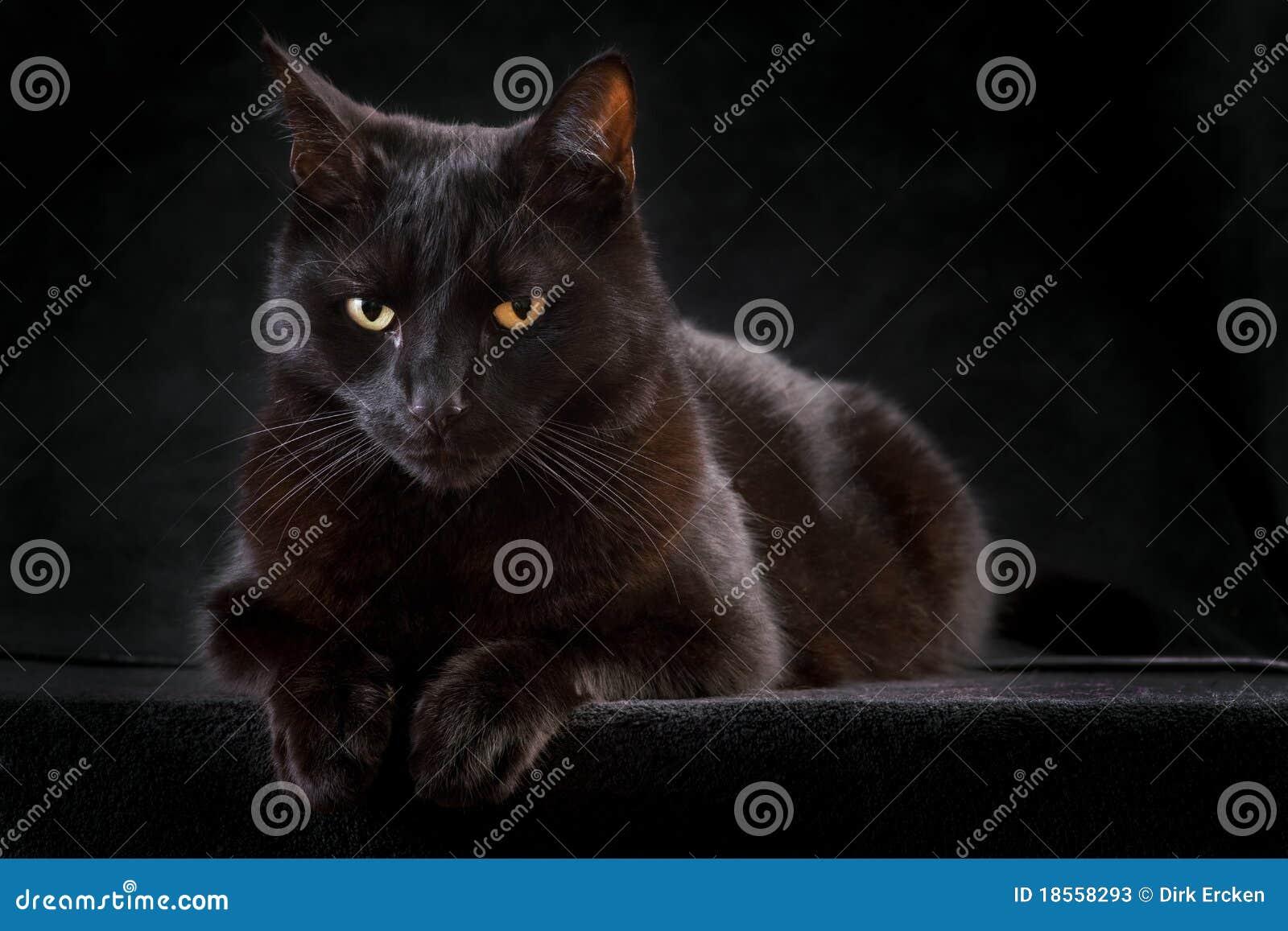 Nyfiken mystisk nattsitting för djur svart katt
