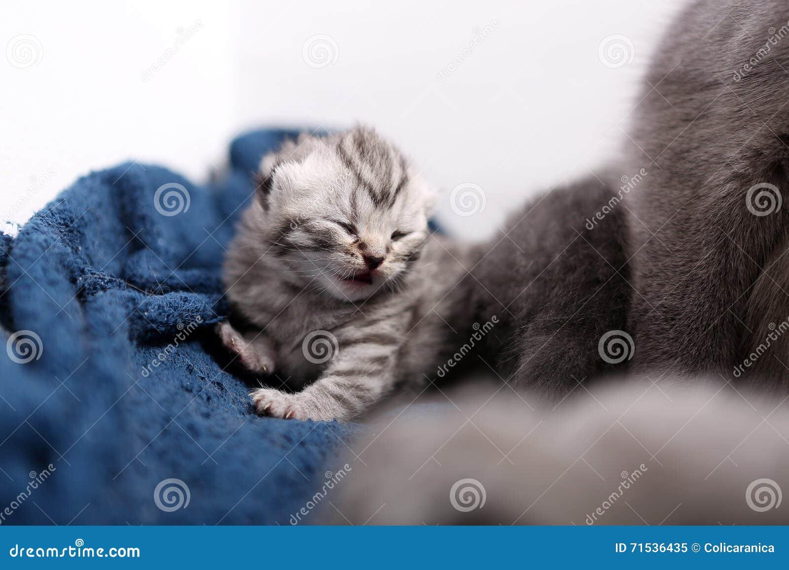 Nyligen uthärdad kattunge