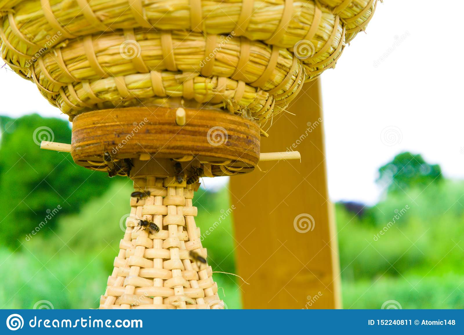 Nytt bikupabyggande i vondelparken i amsterdam