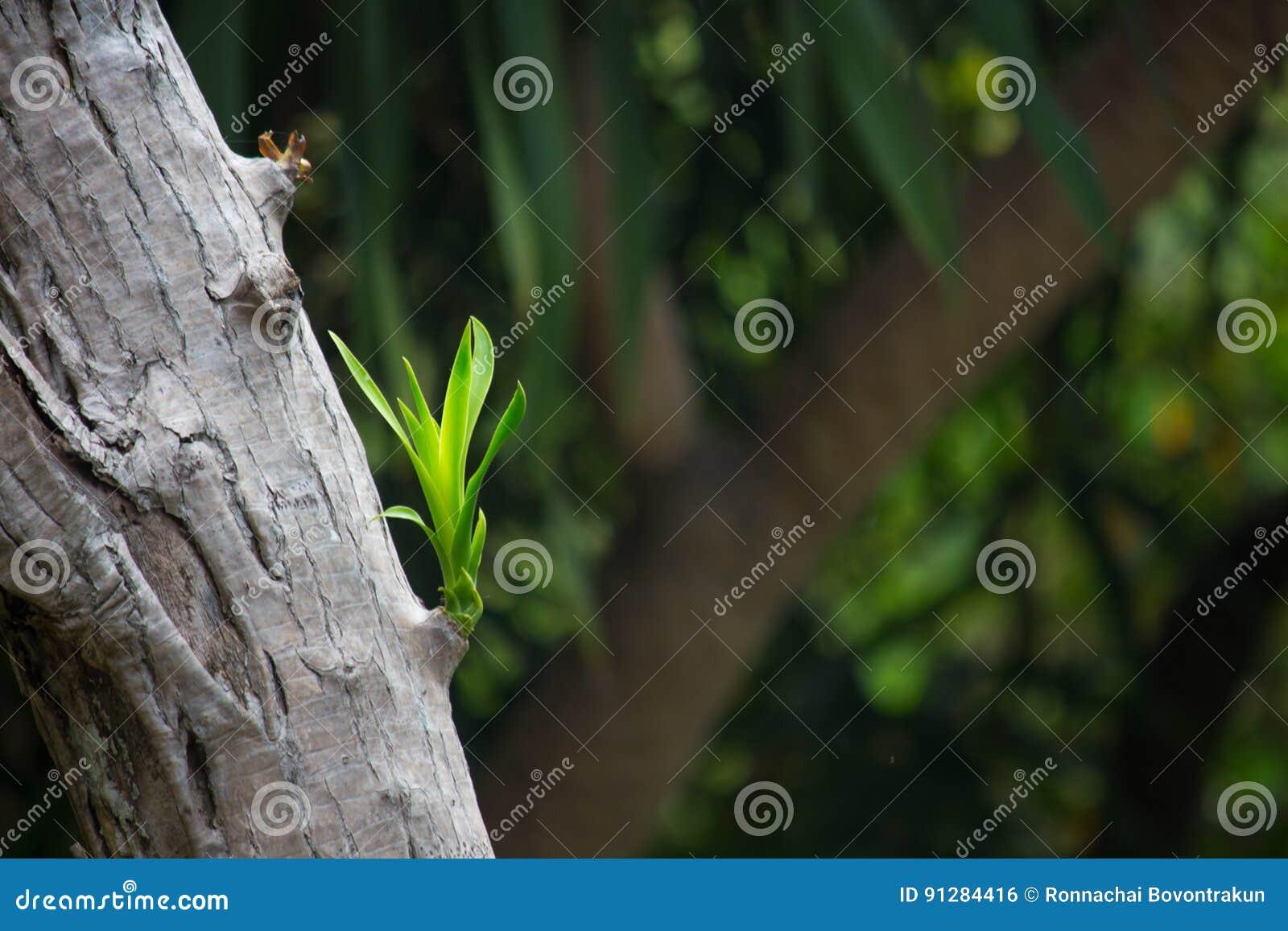 Nytt förgrena sig att växa på en gammal Tree fjädrar in