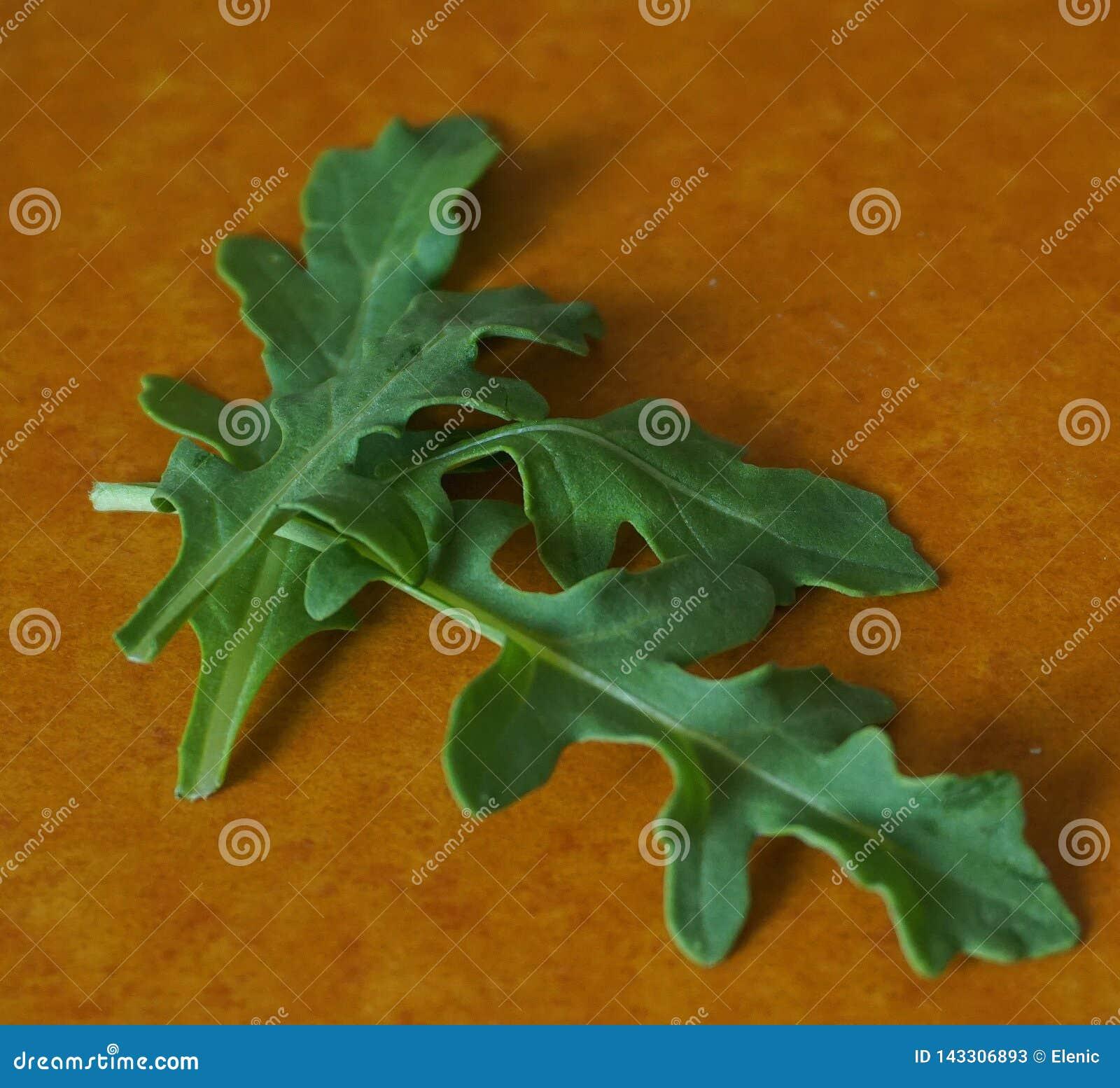 Nytt grönt organiskt arugulablad på hardboard